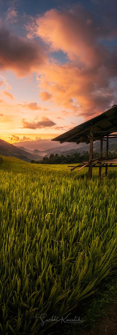 Sunset in Vietnam Rice Fields