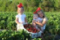 Strawberry Time.JPG
