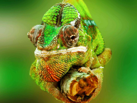 Are your customers turning into chameleons?