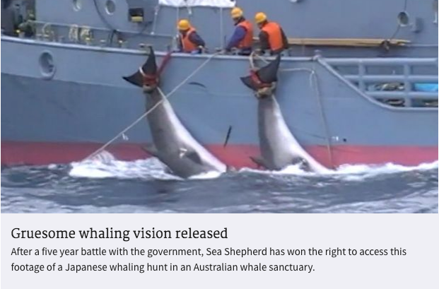 A Victory for the Whales in Australia