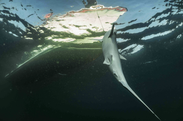 In pictures: Omani fishermen play their part in destructive global shark trade