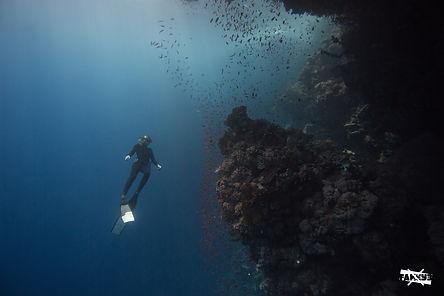 Dahab, Egypt. Freediving Dahab. Ras Mohammad