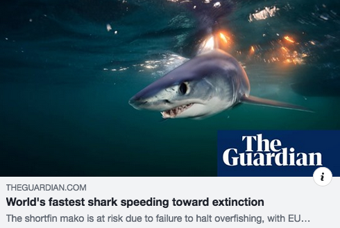World's fastest shark speeding toward extinction
