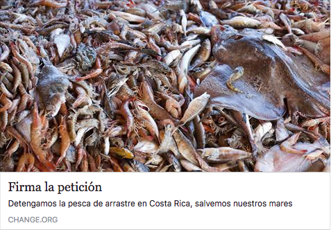 Shrimp trawlers, sign the petition!