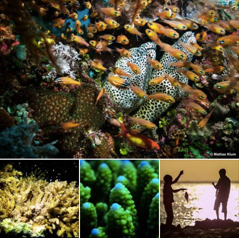 GOOD NEWS FOR CORAL REEFS ON VAMIZI ISLAND