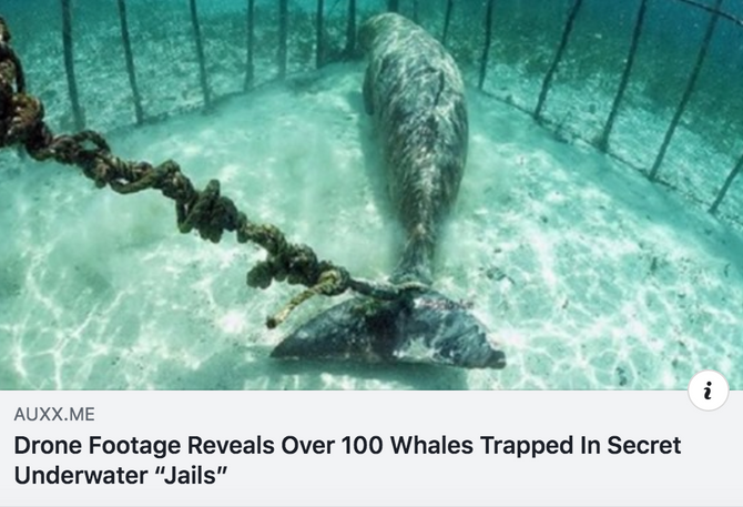 "Drone Footage Reveals Over 100 Whales Trapped In Secret Underwater ""Jails"""