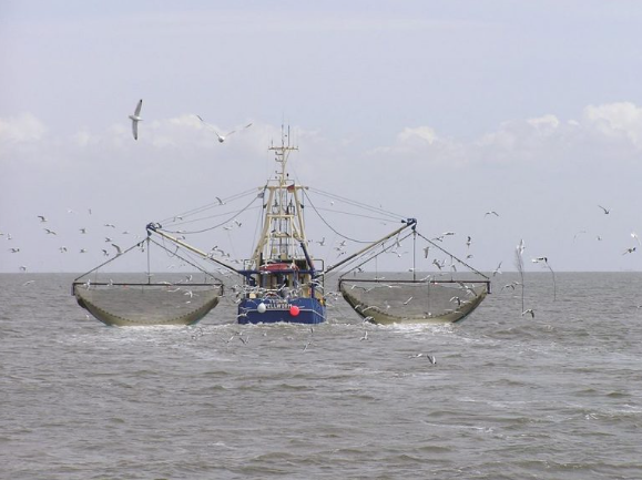 Why 'Eating Just Fish' Still Harms the Environment