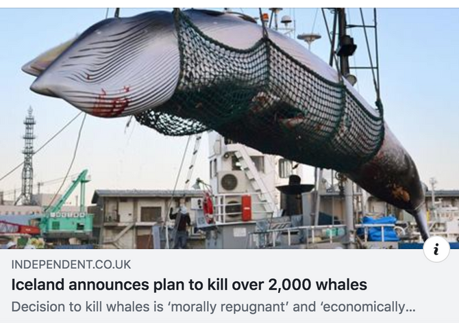 Iceland announces plan to kill over 2,000 whales within next five years