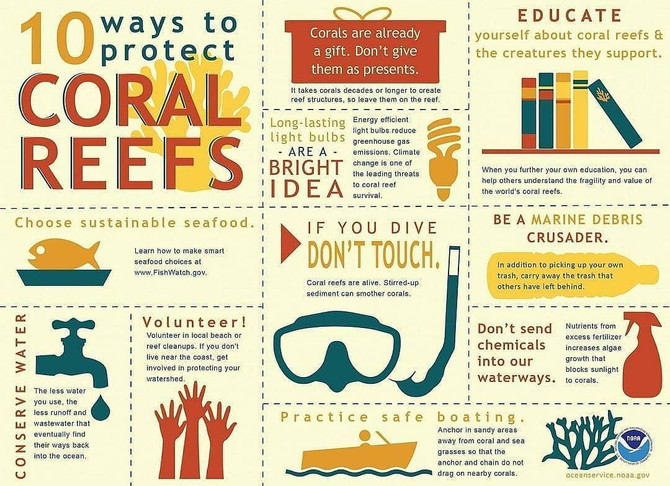 10 things you can do to HELP protect Coral reefs
