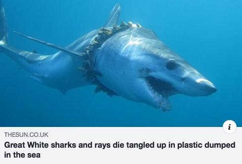 DEATH IN THE OCEAN