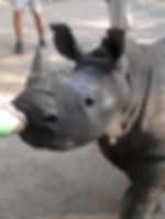 animal wildlife nature conservation africa rhino vet work