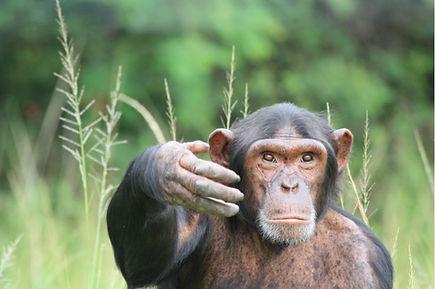 animal volunteer wildlife africa gap year travel person safari conservation
