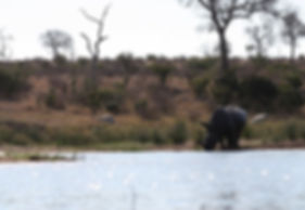 afica animals wildlife rhino safari travel research