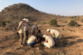 wildlife volunteer africa researching