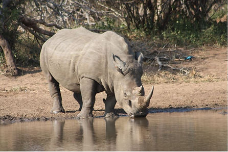 africa travel volunteer gap year animal conservation wildlife nature