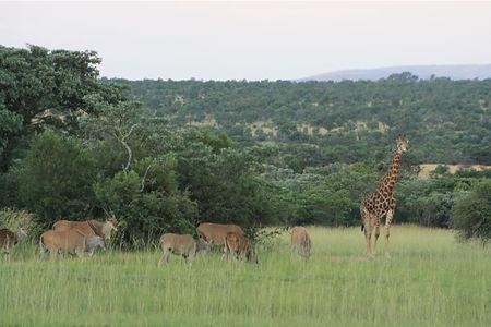 animal wildlife nature conservation africa volnteer work travel gap year adventure