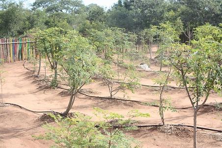 nature travel africa volunter animal wildlife