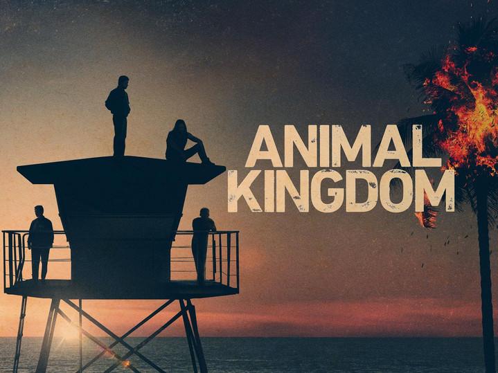animal kingdom.jpg