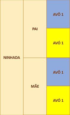 figura 2a.png