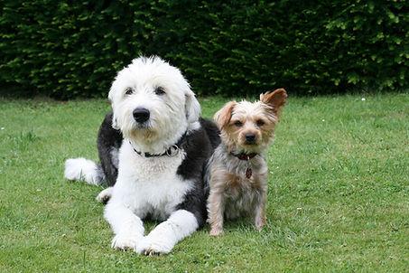 dogs-2270034_1920.jpg