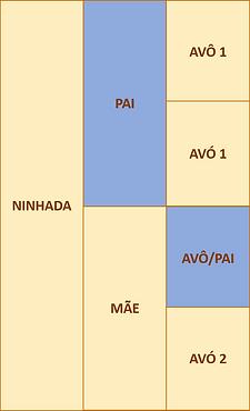 figura 3a.png