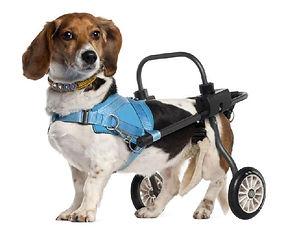 cadeira-roda-para-cachorro.jpg