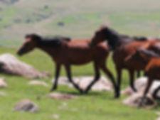 馬プラセンタ化粧品サプリメントOEM