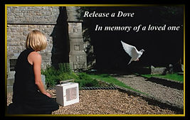 dove-release.jpg