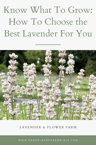 Know What To Grow: How To Choose the Best Lavender For You