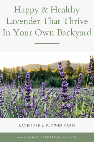 Happy & Healthy Lavender That Thrive In Your Own Backyard