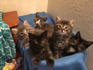 Happy First Birthday Sunflower's Kittens!
