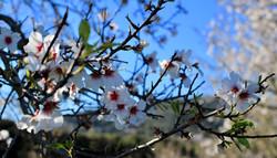 mantelipuu