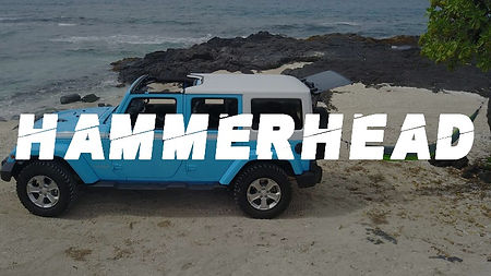 hammerheadhover_edited.jpg