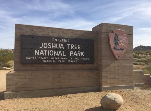 Joshua Tree ja Palm Springs