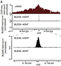 chip-seq and BLESS.JPG
