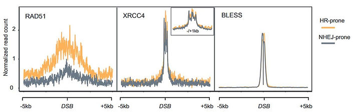 chip-seq and BLESS HR and NHEJ.JPG