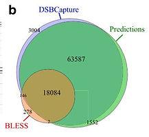DSB predictions.JPG