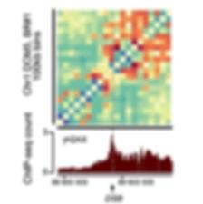 DSB clustering.JPG