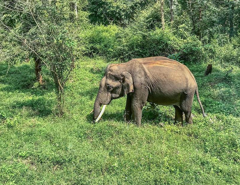 OOTY Elephant SM.jpg