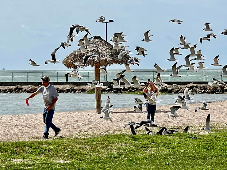 Magnolia Beach Rockport 3.jpg