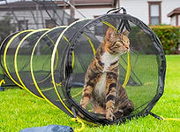 CatTunnelAmazon.jpg