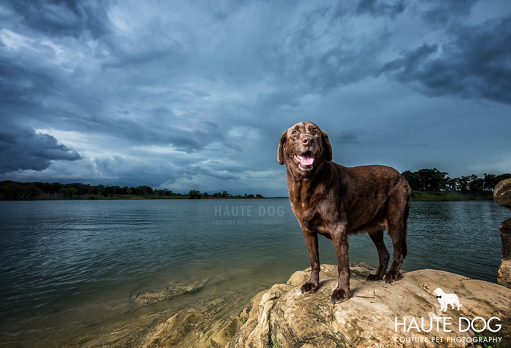 Dallas pet photography lab at Grapevine Lake storm clouds
