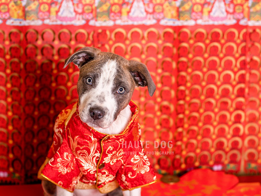 The Year of the Dog | Dog Friendly Fun in Dallas