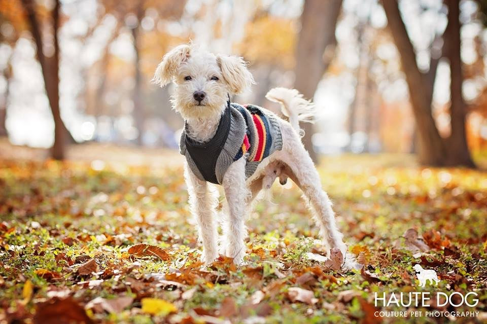 Dog Parks Dallas