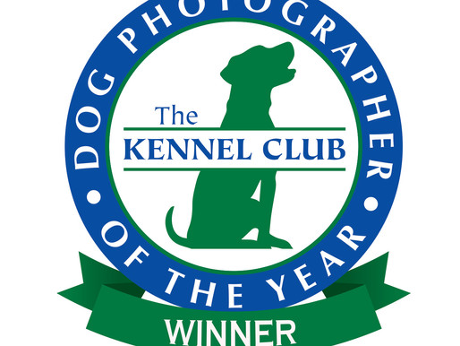 PRESS RELEASE: Dallas Pet Photographer Awarded in Largest International Dog Photography Competition