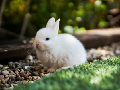 The Pampered Bunny Bonanza