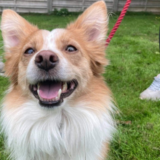Ollie (Reserved)