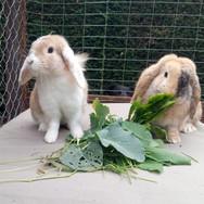 Rupert & Ruby