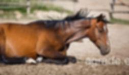 Pellet para cama de caballos. Precio del palé 284€