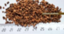 Hueso de aceituna seco con orujillo